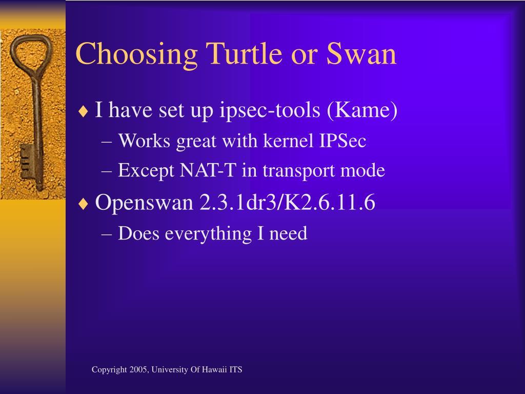 Choosing Turtle or Swan