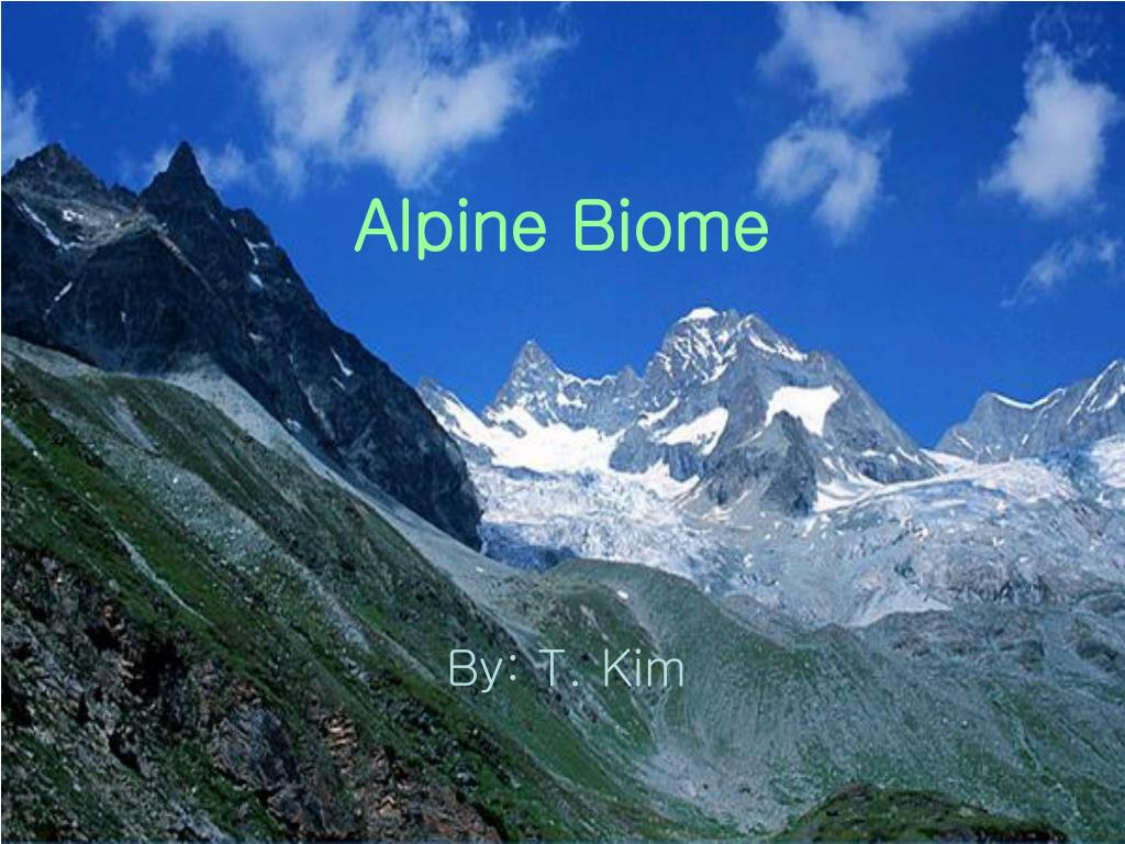 alpine biome l.
