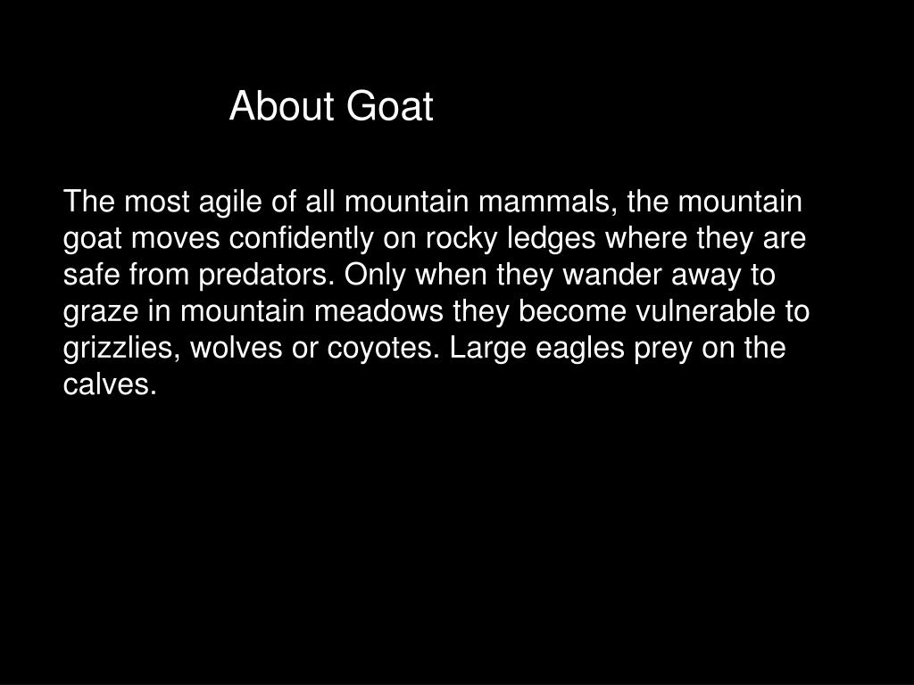 About Goat