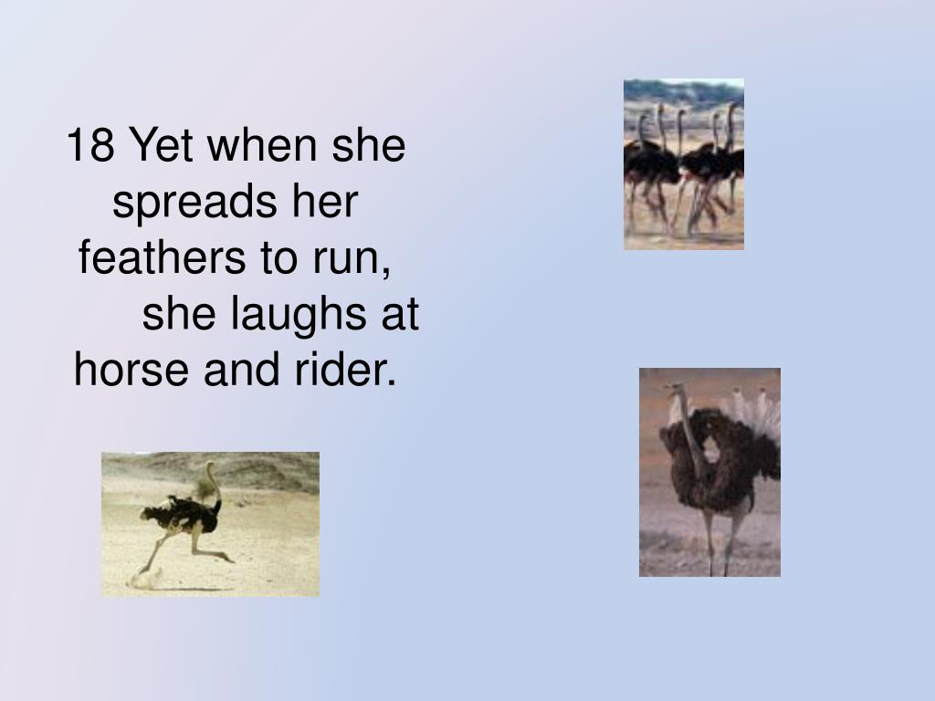 18 Yet when she spreads her feathers to run,