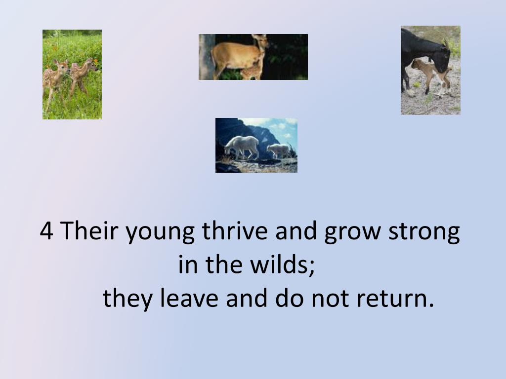 4 Their young thrive and grow strong in the wilds;