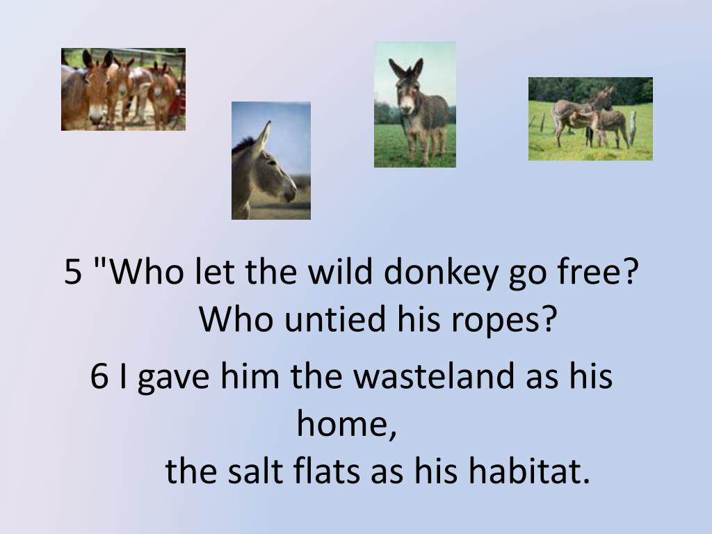 "5 ""Who let the wild donkey go free?"