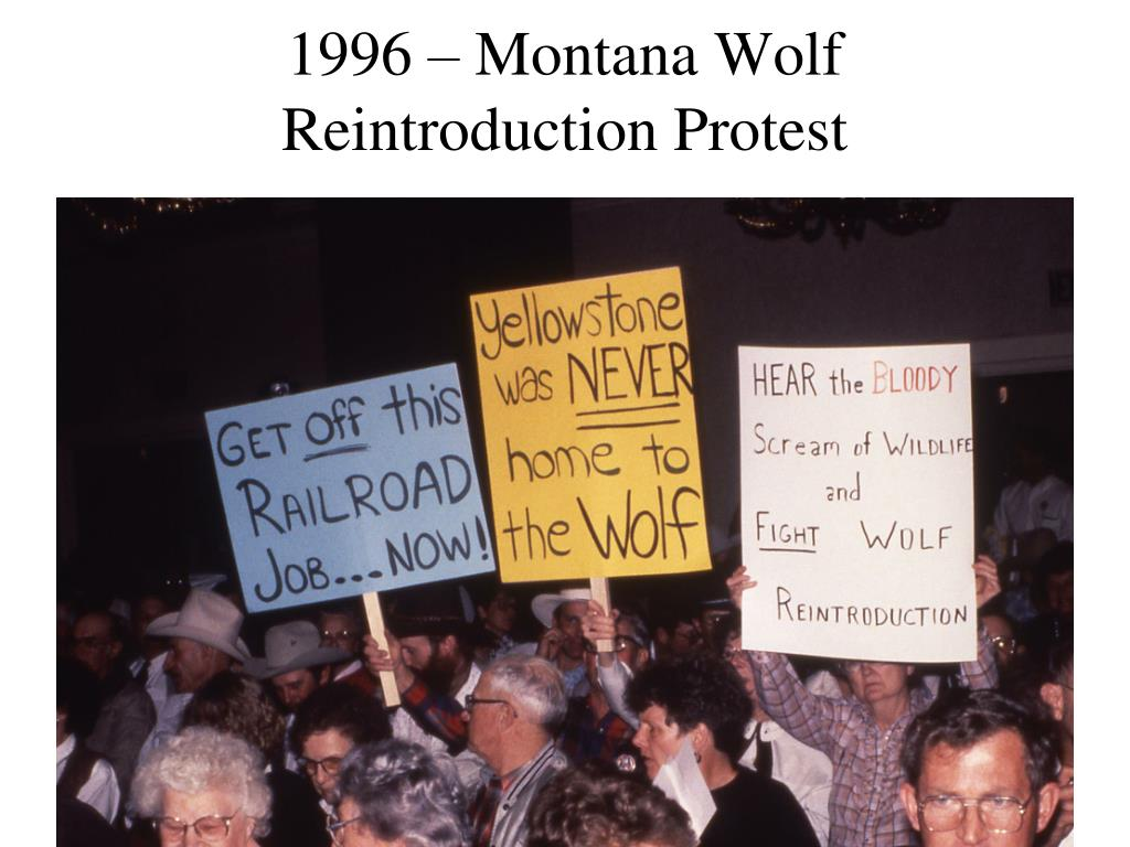 1996 – Montana Wolf Reintroduction Protest