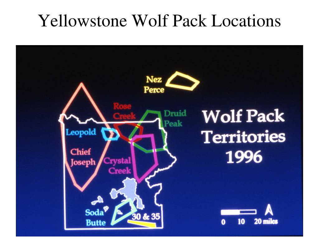 Yellowstone Wolf Pack Locations