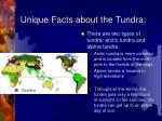unique facts about the tundra