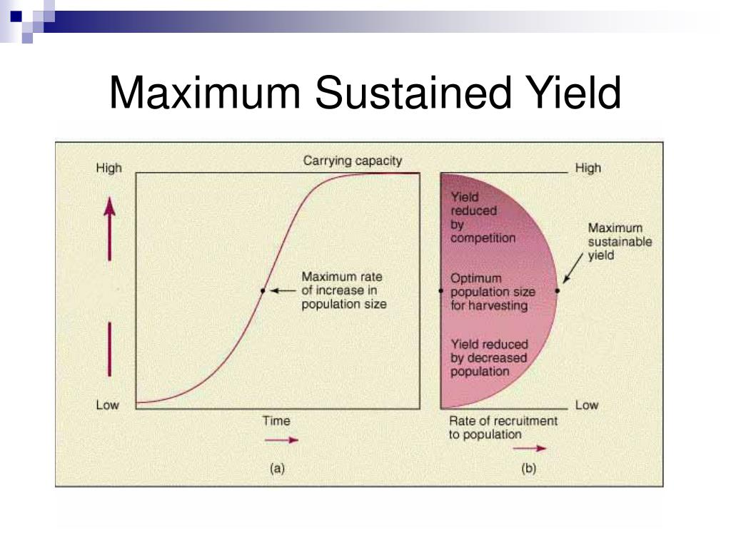 Maximum Sustained Yield