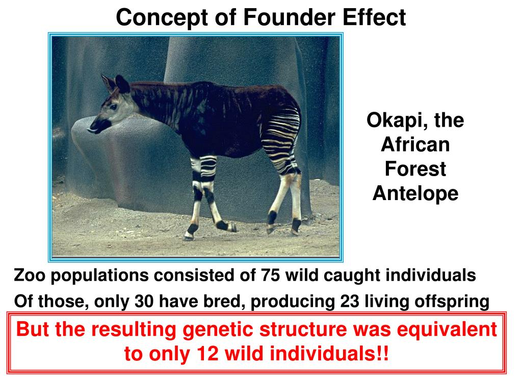 Concept of Founder Effect