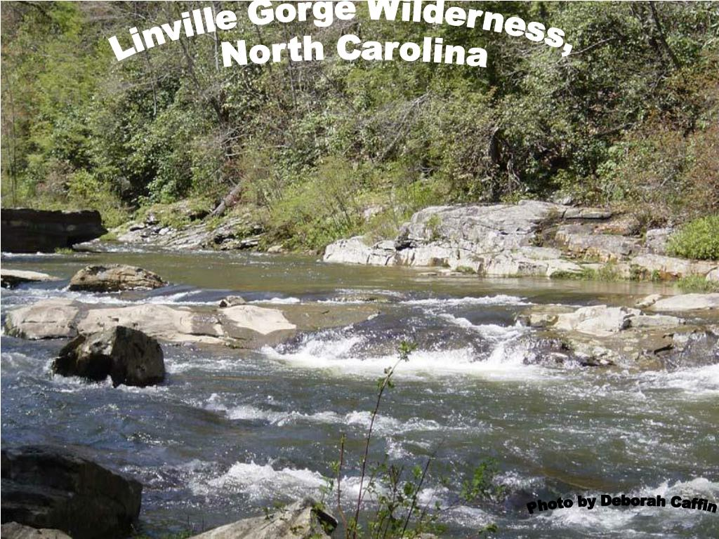 Linville Gorge Wilderness,