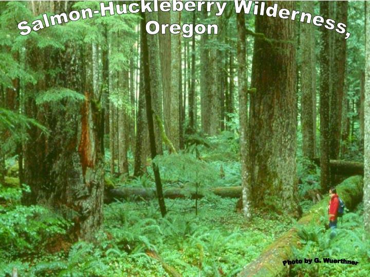 Salmon-Huckleberry Wilderness,