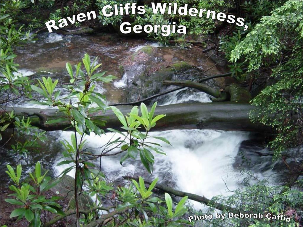 Raven Cliffs Wilderness,