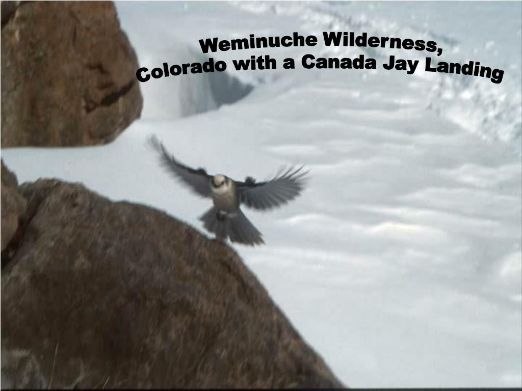 Weminuche Wilderness,