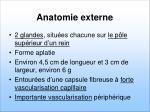 anatomie externe