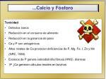 calcio y f sforo3