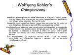 wolfgang kohler s chimpanzees1