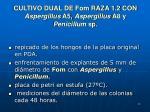 cultivo dual de fom raza 1 2 con aspergillus a5 aspergillus a8 y penicillum sp