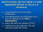 cultivo dual de fom raza 1 2 con aspergillus terreus a flavus y a ochraceus