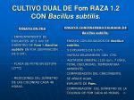 cultivo dual de fom raza 1 2 con bacillus subtilis