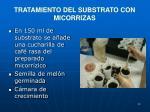tratamiento del substrato con micorrizas