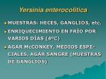 yersinia enterocolitica1
