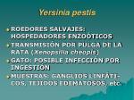 yersinia pestis1