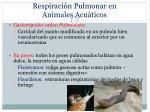 respiraci n pulmonar en animales acu ticos