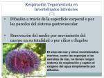 respiraci n t egumentaria en invertebrados inferiores