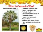 what is carnauba wax