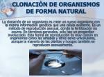 clonaci n de organismos de forma natural