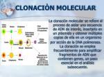 clonaci n molecular