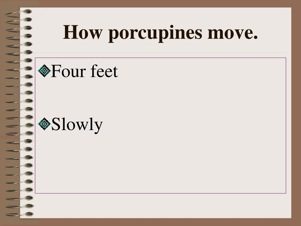 How porcupines move.