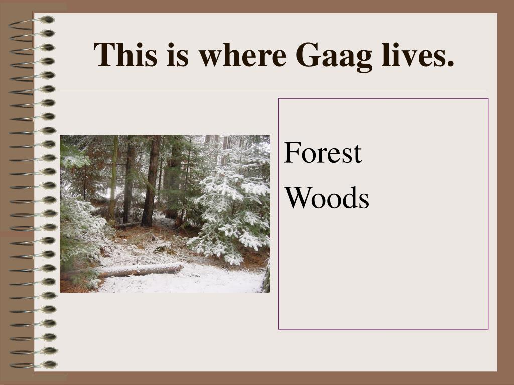 This is where Gaag lives.