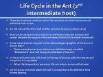 life cycle in the ant 2 nd intermediate host