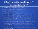 life cycle in the land snail 1 st intermediate host