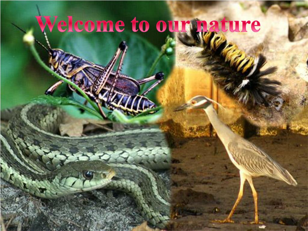 Welcome to our nature