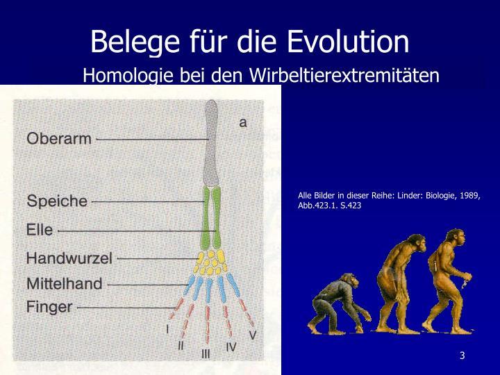 PPT - Belege für dieEvolution PowerPoint Presentation - ID:943281