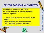 se for passear floresta1