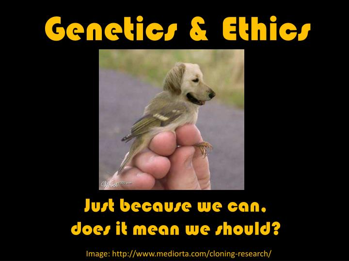 genetics ethics n.