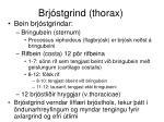 brj stgrind thorax