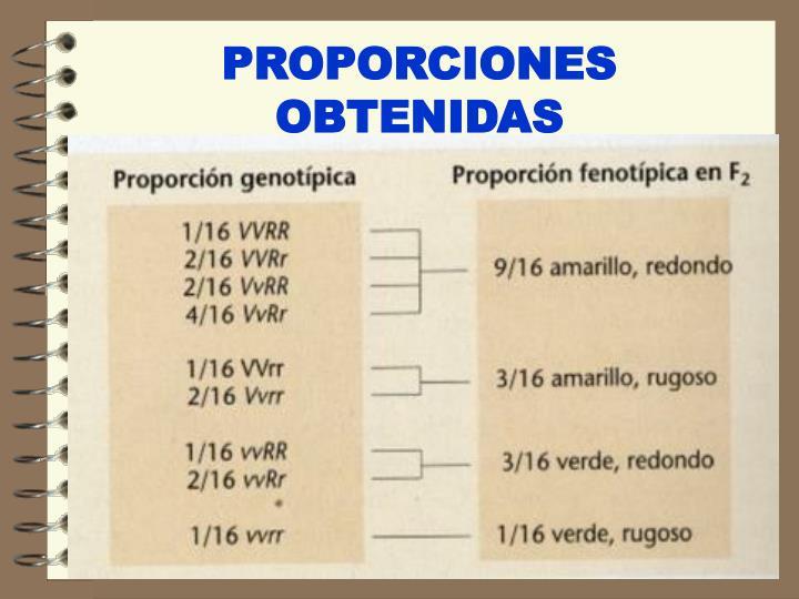 PROPORCIONES OBTENIDAS