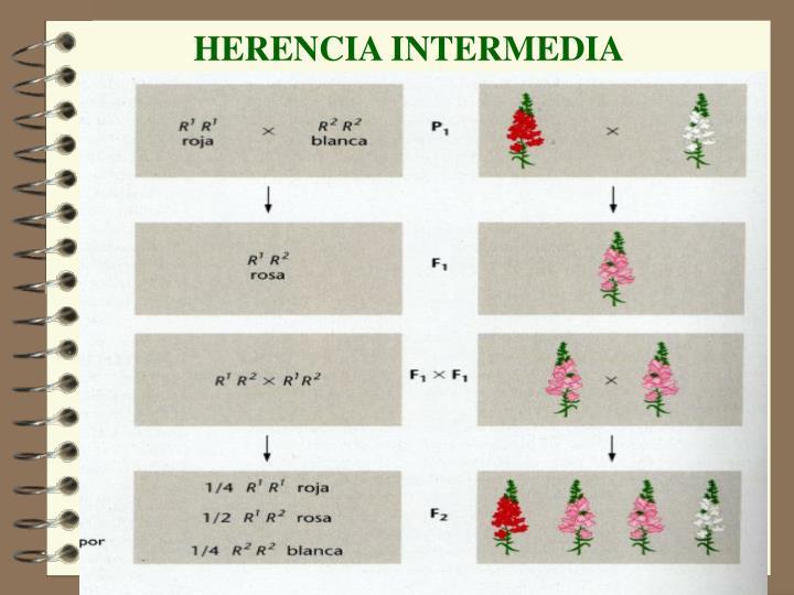 HERENCIA INTERMEDIA