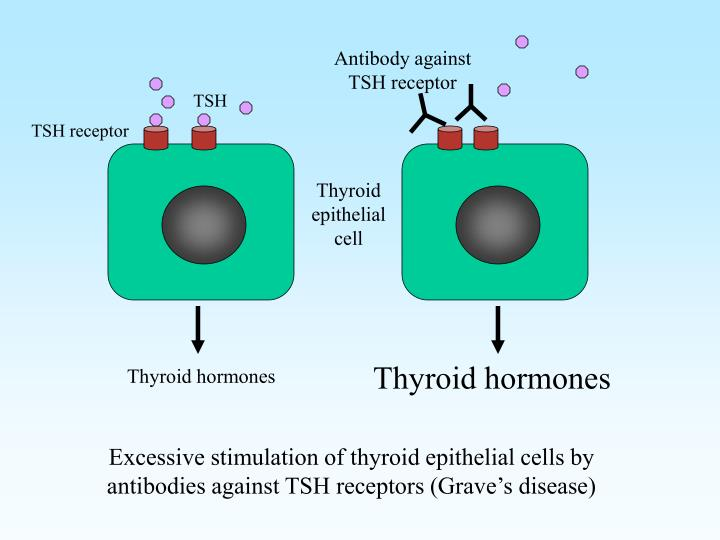 Antibody against TSH receptor