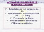 acciones biol gicas de la hormona tiroidea