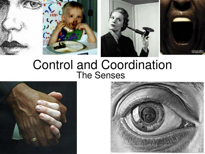 control and coordination n.