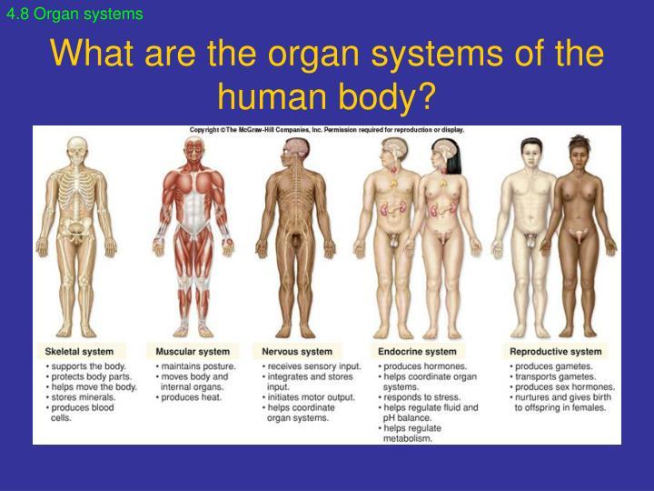 4.8 Organ systems