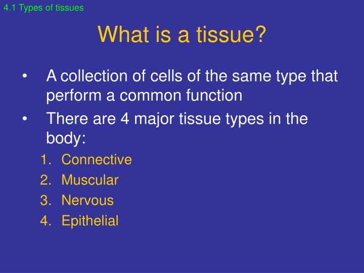 What is a tissue