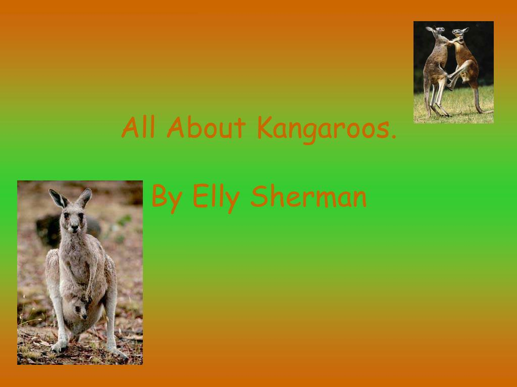 all about kangaroos by elly sherman l.