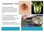 exoparasites ticks