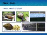 risks snails