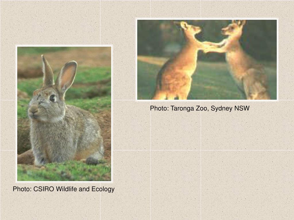 Photo: Taronga Zoo, Sydney NSW