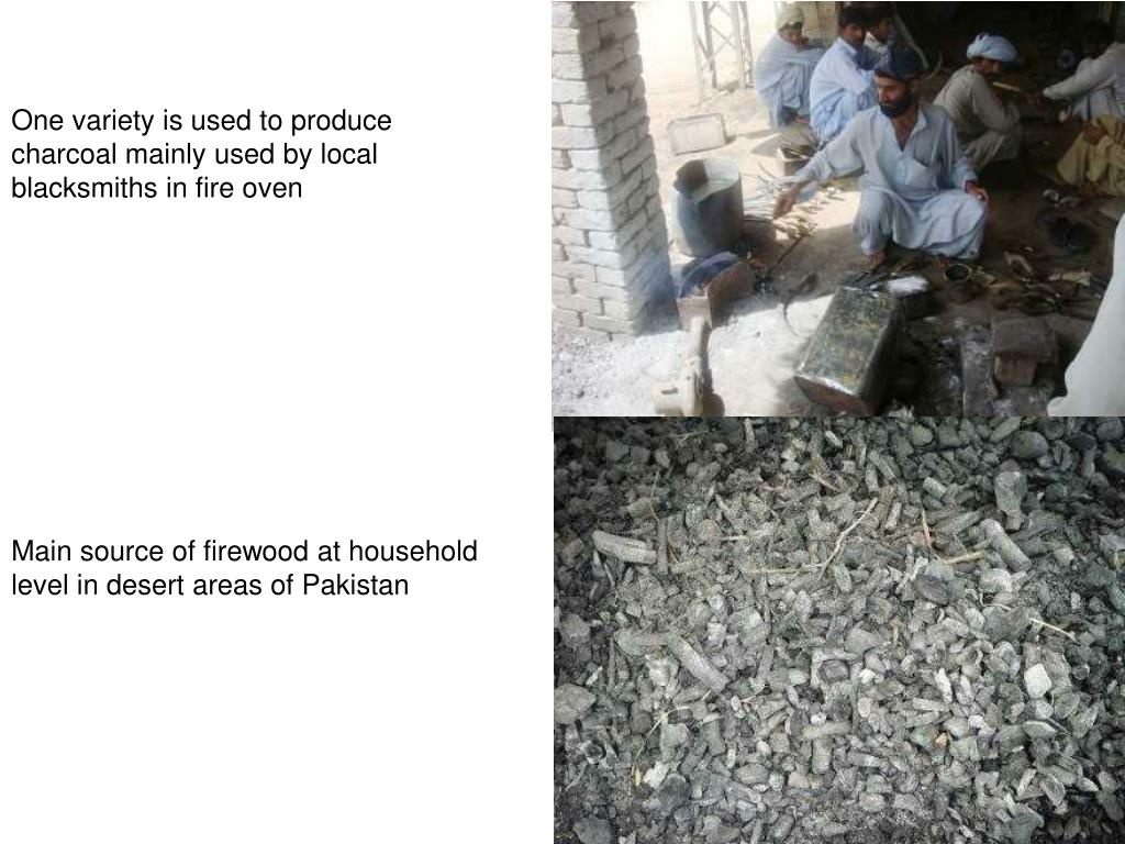 One variety is used to produce charcoal mainly used by local blacksmiths in fire oven